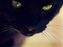 Аватар пользователя Murko