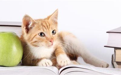 кот, кошка, ученый