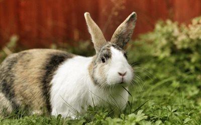 кролик, пушистый
