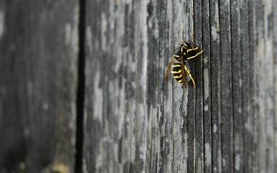 бджола, пчела, макро