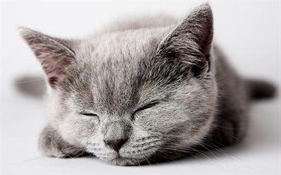 кот, глаза, серый, котик