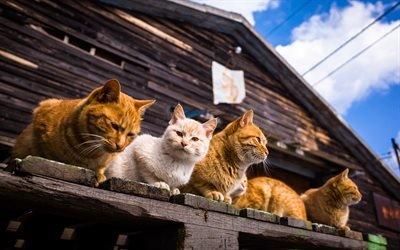 Домашние любимцы, Коты, Сходка