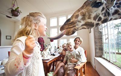 Девочка и жираф, Отель, Найроби, Кения, Girl, Giraffe, Hotel, Nairobi, Kenya