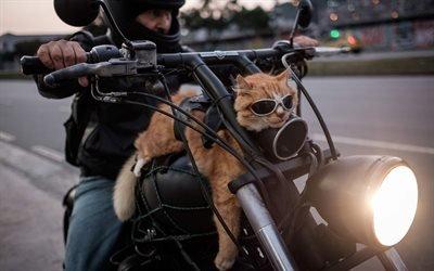 Мотоцикл, Кот, Рио-де-Жанейро, Бразилия, Cat, Motorcycle, Rio de Janeiro