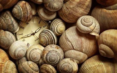 Ракушки, Часы, Текстуры