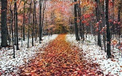 природа, дорога, осень, лес, деревья, листья, снег