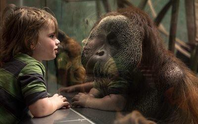 Зоопарк, Стекло, Орангутан, Встреча
