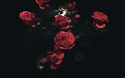Букет, троянди, розы, роза