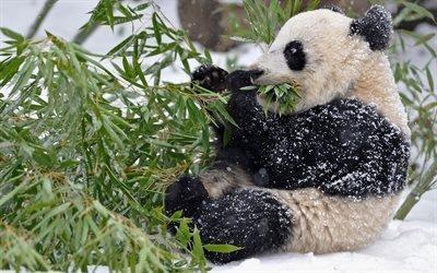 панда, эвкалипт, зима, снег, обед