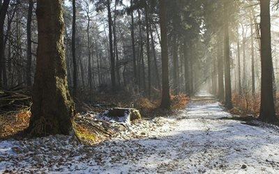 природа, осень, дорога, снег, деревья, пень, лес, свет, лучи, 4к