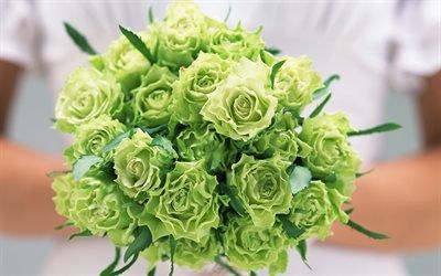зеленые розы, зелені троянди, роза