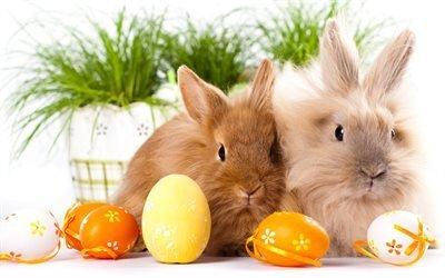Великдень, кролики, великодні яйця, милі тваринки, Пасха, пасхальные яйца, милые животные