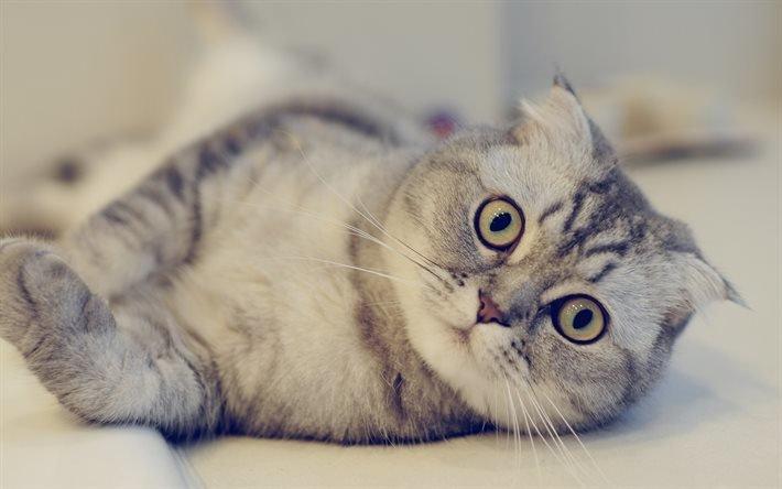 серый кот, большие глаза, сірий кіт, великі очі