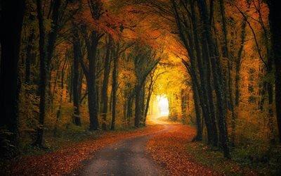 осень, осенний пейзаж, лес, дорога, желтые деревья