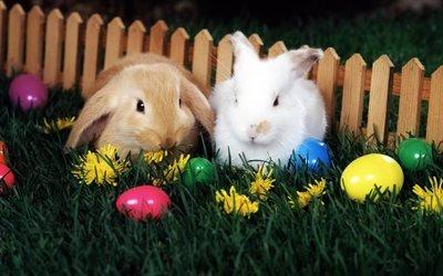 кролики, Пасха, яйца