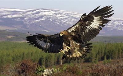 орел, орлы, крылья