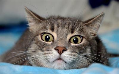 Домашний любимец, Кот, Взгляд, Позирует