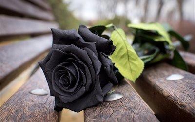 цветок, роза, доски, скамья