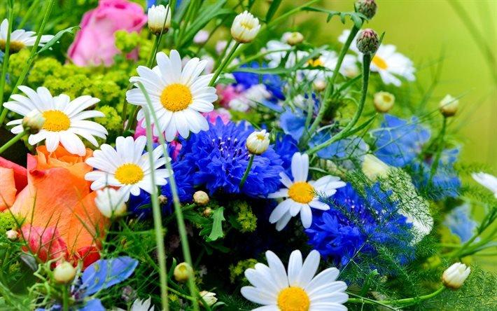 полевые цветы, букеты, хризантемы, ромашки, роза