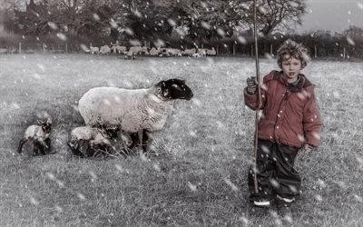 Зима, Поле, Овца, Ягнята, Маленький пастух