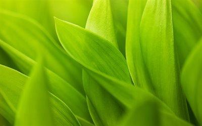 листья, wallpaper green, зелёный, foliage, обои зелень, макро обои, close-up wallpaper, green