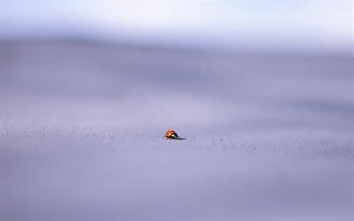 макро, фон, коровка, close-up, background, ladybug