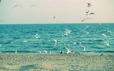чайки, чайка, море