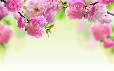 цветы, деревья, весна