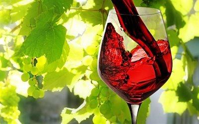 красное вино, бокал с вином, вино, виноград, червоне вино, келих з вином