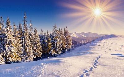 горы, следы, лес, солнце, небо, снег, зима