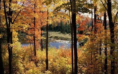 пейзаж, осень, болото, деревья, небо