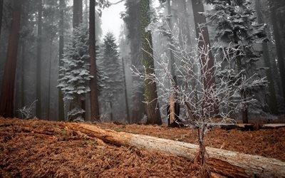 деревья, лес, зима, иней