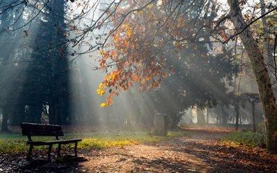осень, свет, природа, парк, лавка, лучи