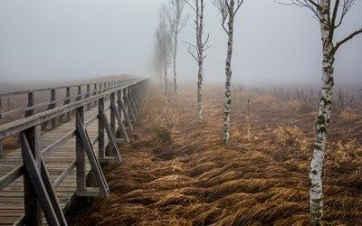 Мост, Туман, Деревья, Бад - Бухау, Баден - Вюртемберг, Германия, Bad Buchau, Baden - Wurttemberg, Germany