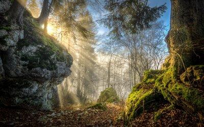 Скалы, Лес, Деревья, Горный массив Швабский Альб, Баден - Вюртемберг, Германия, Swabian Jura, Baden - Wurttemberg, Germany