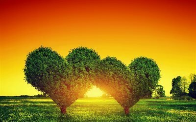 природа, деревья, сердца, солнце