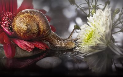 улитка, цветы, отражение, макро