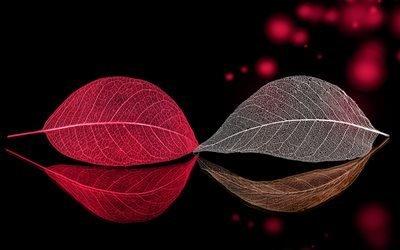 боке, макро, листья