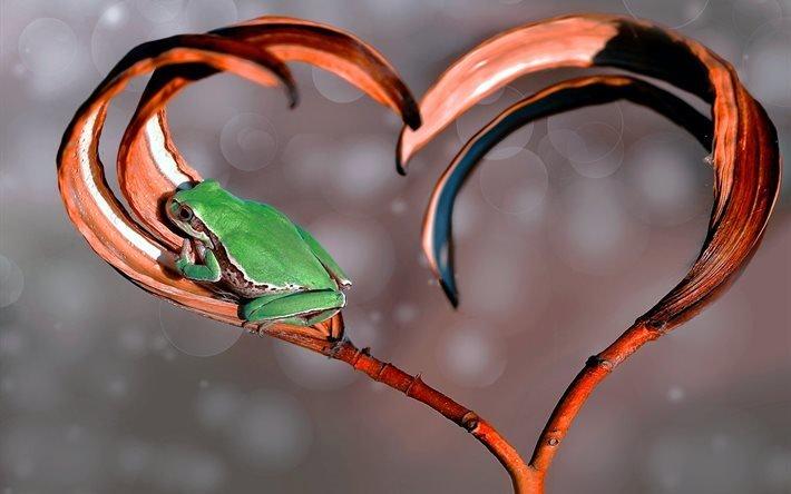 лягушка, макро, ветка, сердце, боке