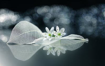 листья, цветы, макро, боке