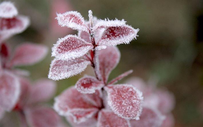 макро, трава, листья, снег, иней, зима, мороз