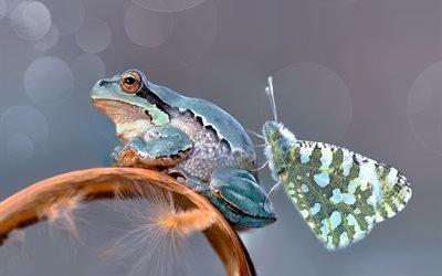 макро, лягушка, бабочка, боке, пушинки