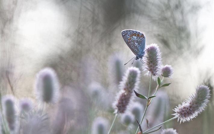 природа, трава, бабочка, макро