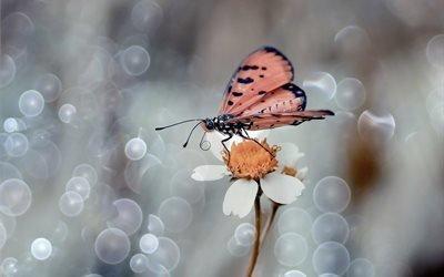 бабочка, цветок, лепестки, боке, макро