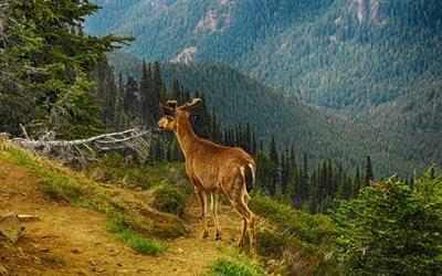 олень, горы, лес, HDR, дикая природа