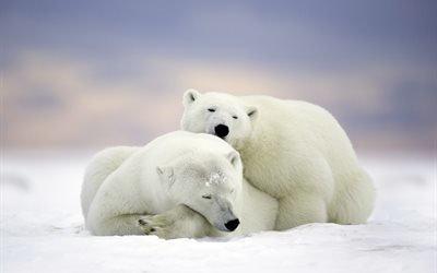 природа, зима, животные, медведи, пара, белые