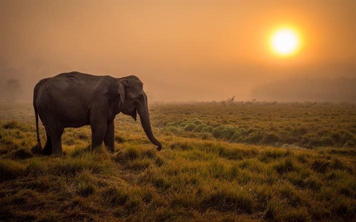 слоник, Африка, дикая природа, закат, саванна, слон