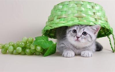 животное, котёнок, муляж, виноград, ягоды, гроздь, корзина