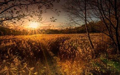 Рассвет, Лес, Осень, Деревья