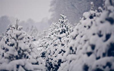 снег, ёлки, зима